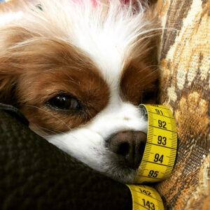 Und das ist Nele  <br> Unser Atelierhund